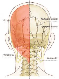 nerf arnold ostéopathie